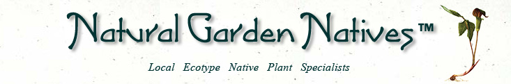 Midwest Natural Garden.  Specializing in Native & Ornamental Perennials & Grasses